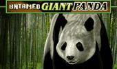 Игровой автомат Untamed Giant Panda на сайте Вулкан